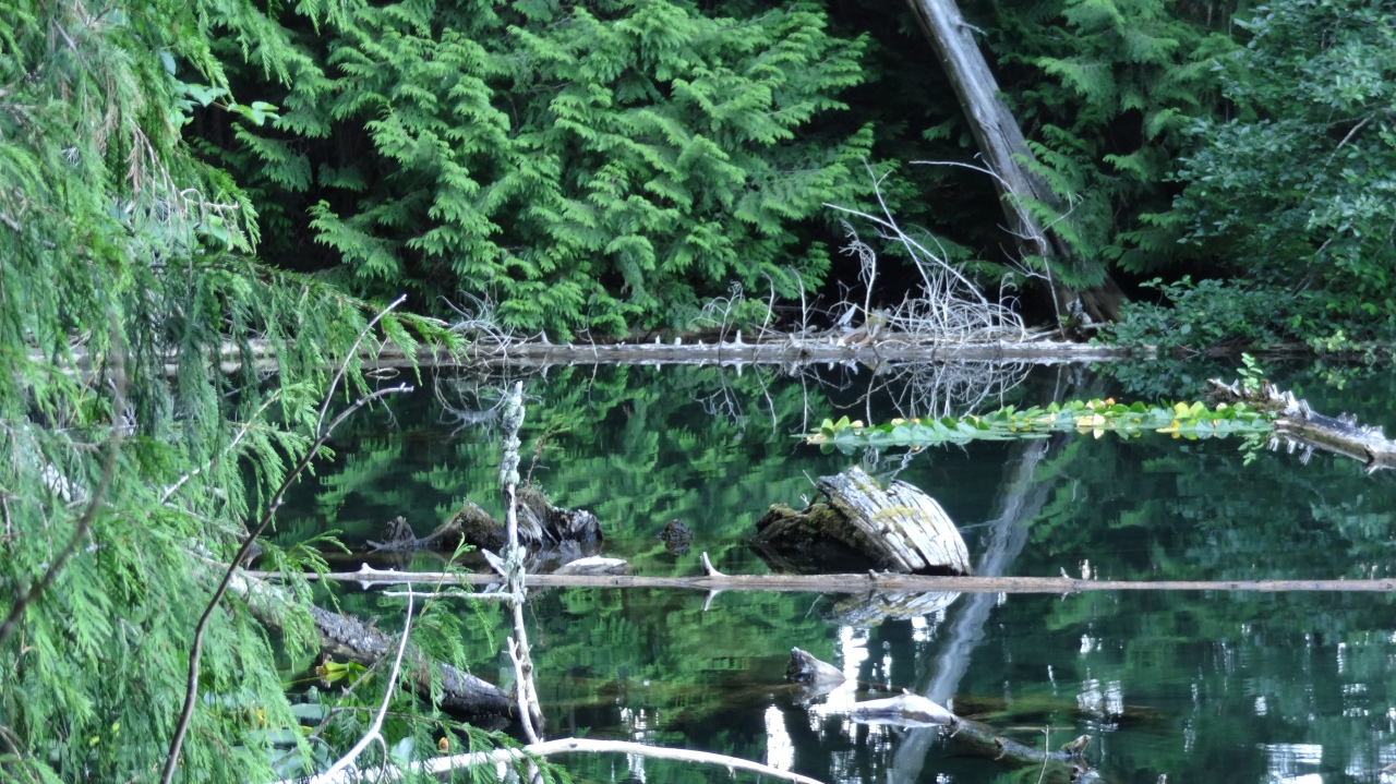 Nature Abound