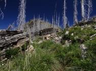 Spar Peak