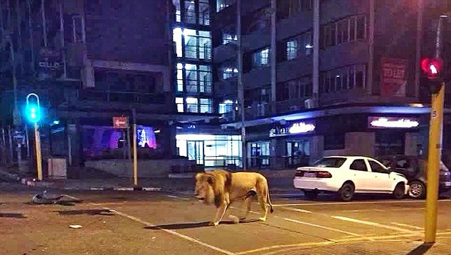 The Lion andI