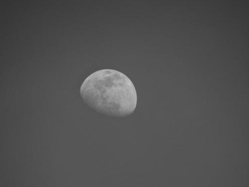 Moon (duh)